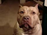 Самый злой пёс в мире!